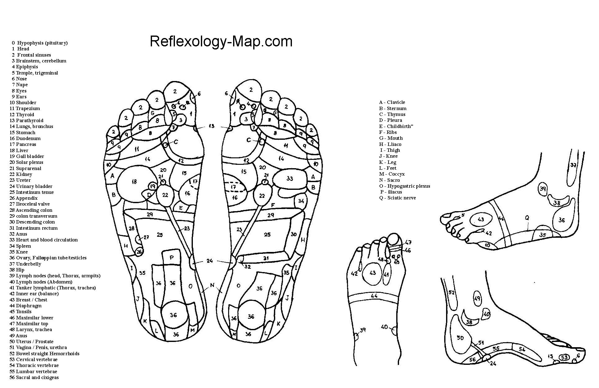 Gratis Download 5 Best Foot Reflexology Chart map! - (With Pictures)