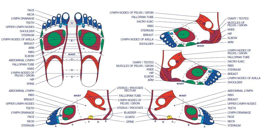 Gratis Download 5 Best Foot Reflexology Chart Updated 2018