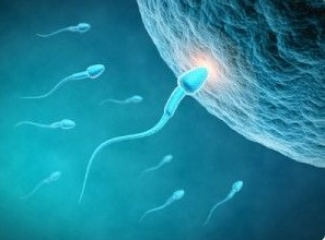 REFLEXOLOGY AND FERTILITY