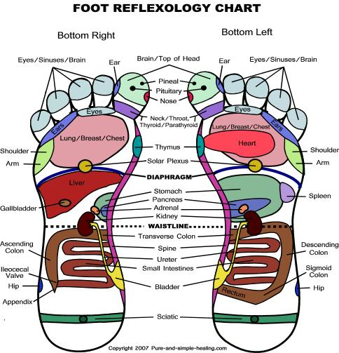 Foot reflexology chart map